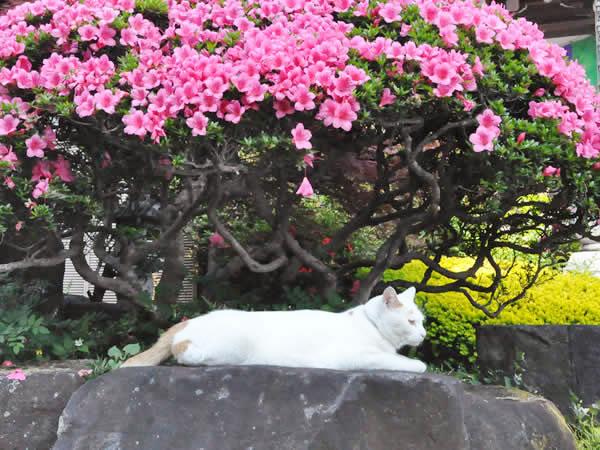 境内で寛ぐ猫